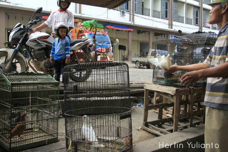 Pedagang Burung di Pasar Tengah Pontianak 1 _hy