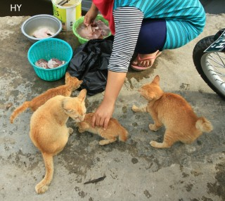 Cats by Herfin Yulianto Pontianak Street Photo
